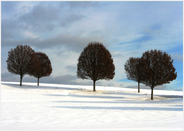 Trees standing in the freshly fallen snow.