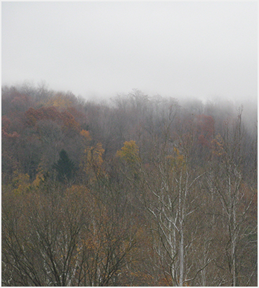Mist and foliage.