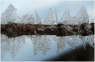 Frost crystals on a twig.