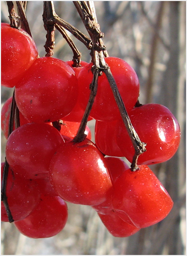 Рецепт с фото led вишневые деревья