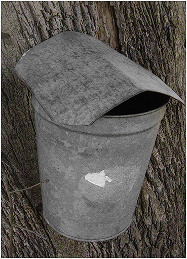 Maple sap bucket.